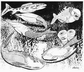 Artists impression of ostracoderms