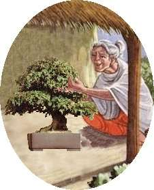 About Bonsai in India