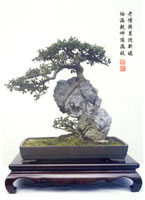 Man Lung Penjing