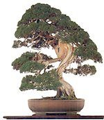 The 5th National PBSI Bonsai Open Competition and Exhibition