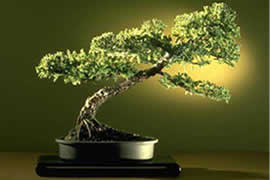 PAMERAN NASIONAL BONSAI & SUISEKI - Exhibition