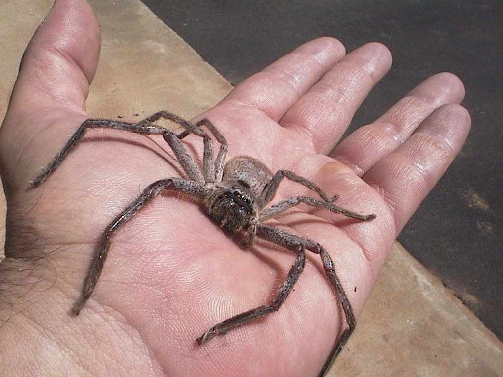 Giant Spiders enter Australian Town (how much, hotel ...